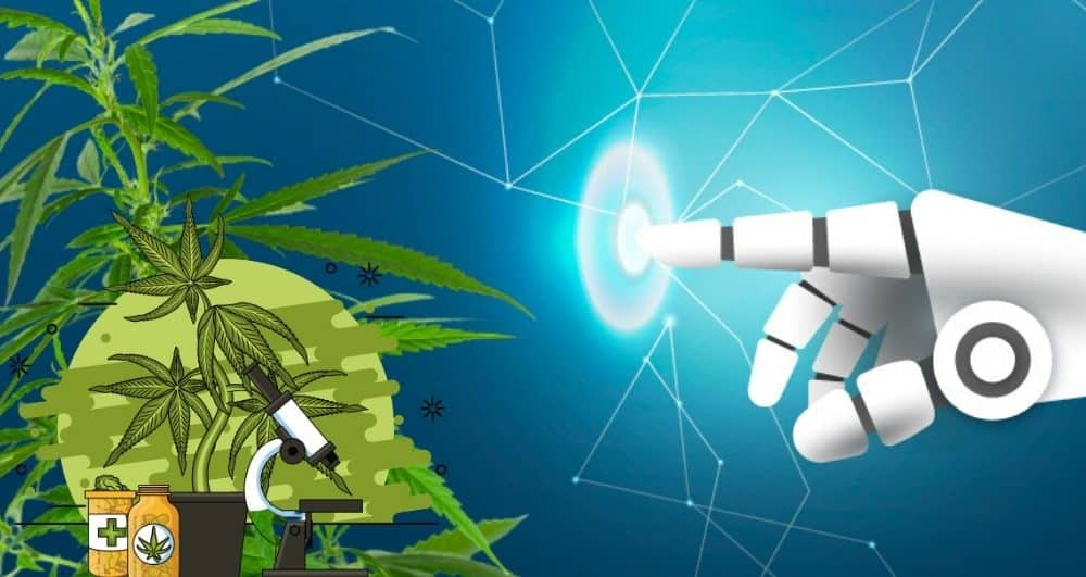 Artificial Intelligence for Cannabis Industry