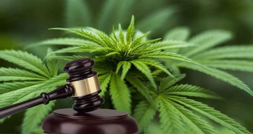 Authorities Find Marijuana Plants in a Howard County Home